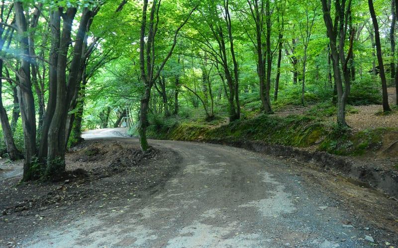 Belgrad Ormanı'nda Kamp Yapılır Mı