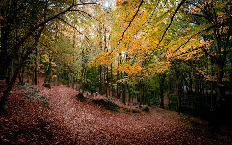 Belgrad Ormanı'na Ne Zaman Gidilir