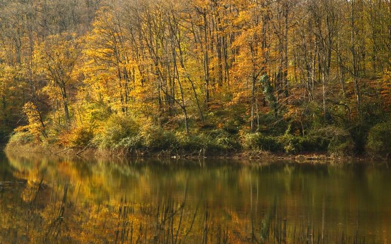 Giriş Ücreti - Belgrad Ormanları