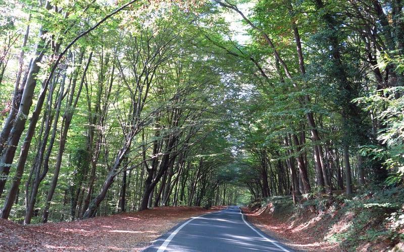 Belgrad Ormanı'na Nasıl Gidilir