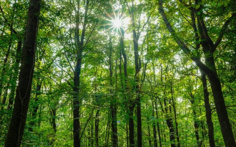 Belgrad Ormanı Hakkında Bilgiler