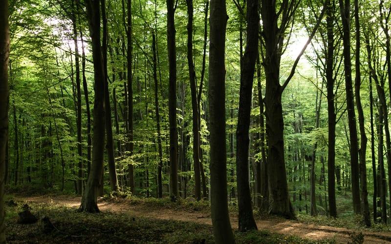 Belgrad Ormanı Kahvaltı