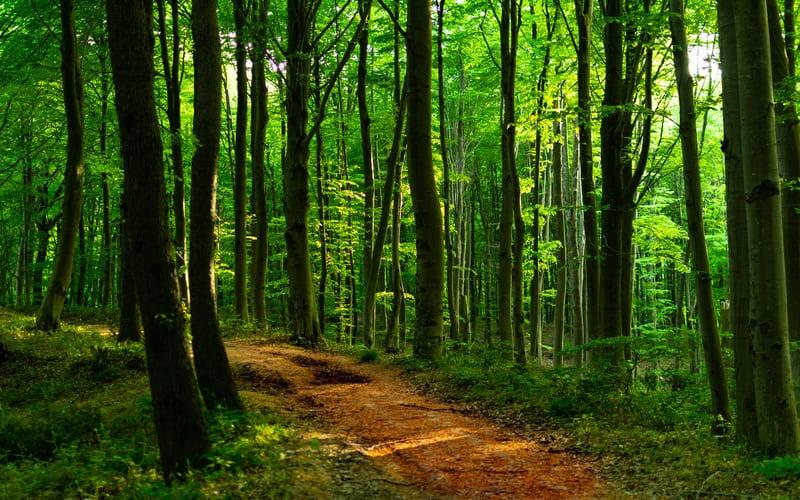 Belgrad Ormanı Piknik Alanı ve Mangal Yerleri
